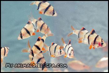 اطلاعات کامل در مورد نگهداری و پرورش و تغذیه ماهی بارب