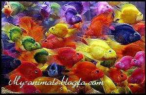 ماهی پاروت
